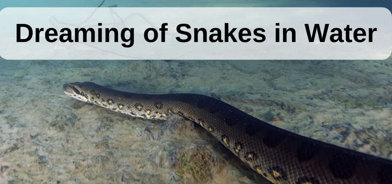 Dreaming of Snakes in water - meaning and interpretation