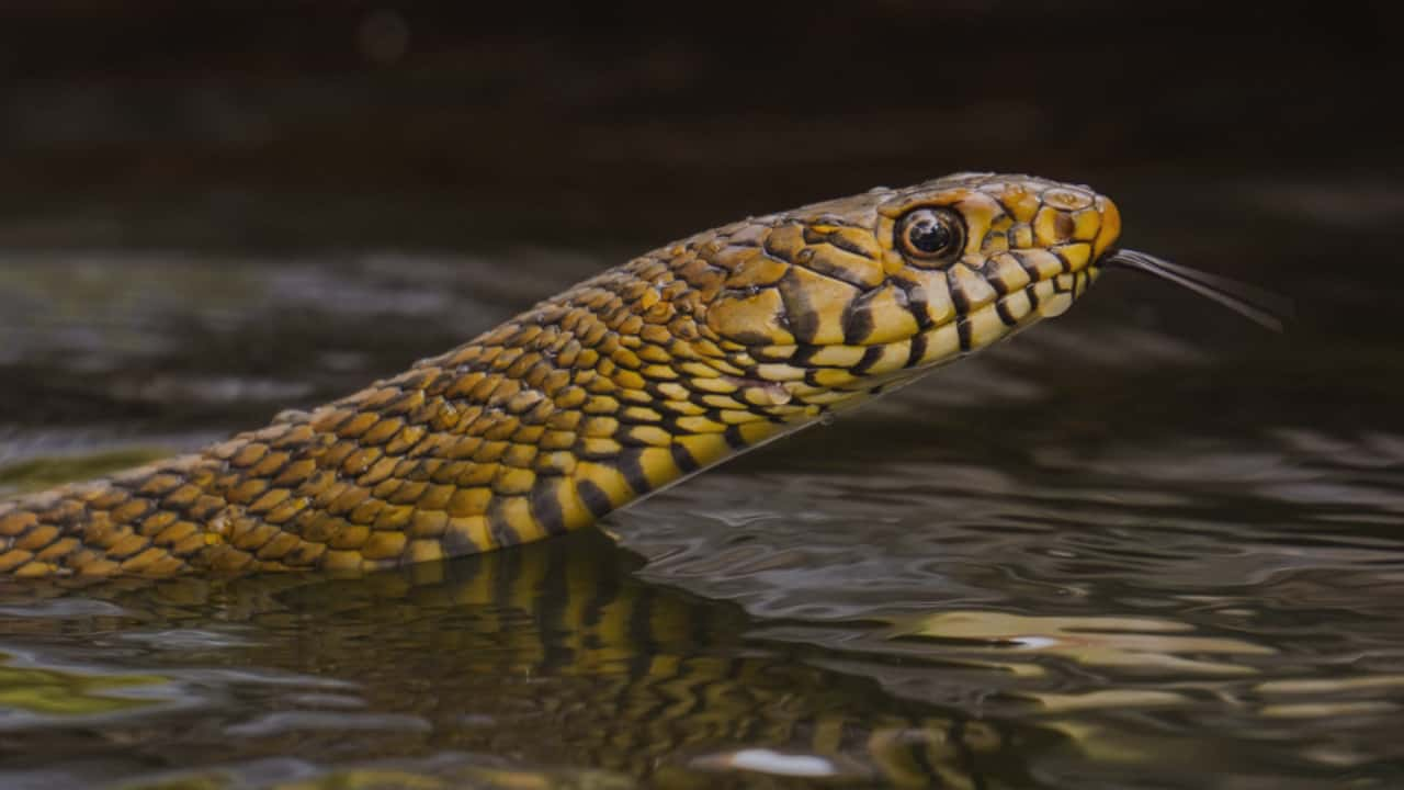I dream about Snakes in water-what does it mean