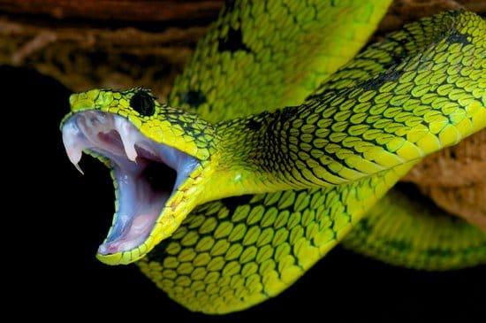 Snake Bite In Dreams
