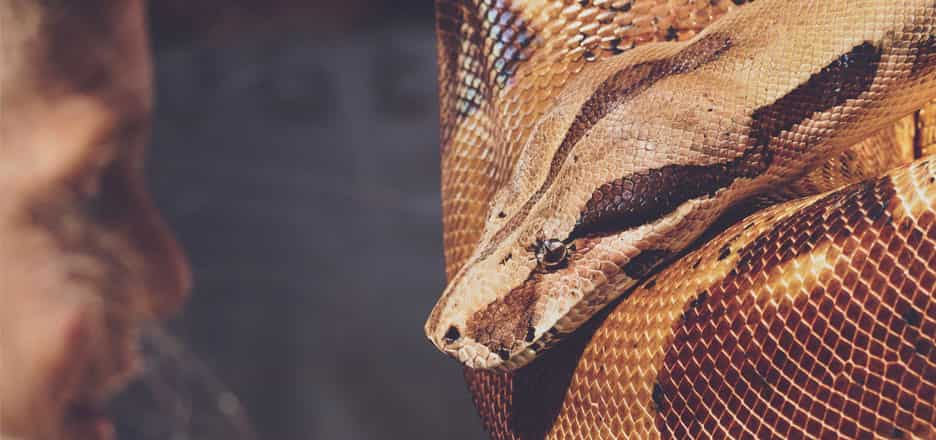 Snake Dream Interpretation Advice