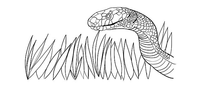 Hình ảnh con rắn trắng và cỏ