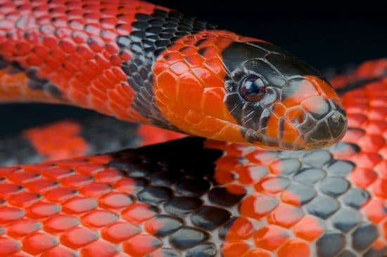 a Red and black color snake