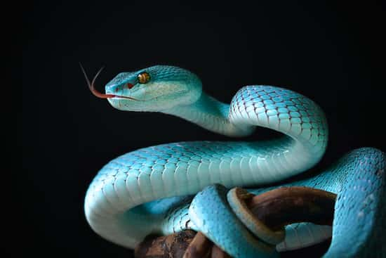 Blue Snake in Dream Interpretation