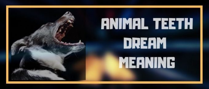 Dream about animal teeth