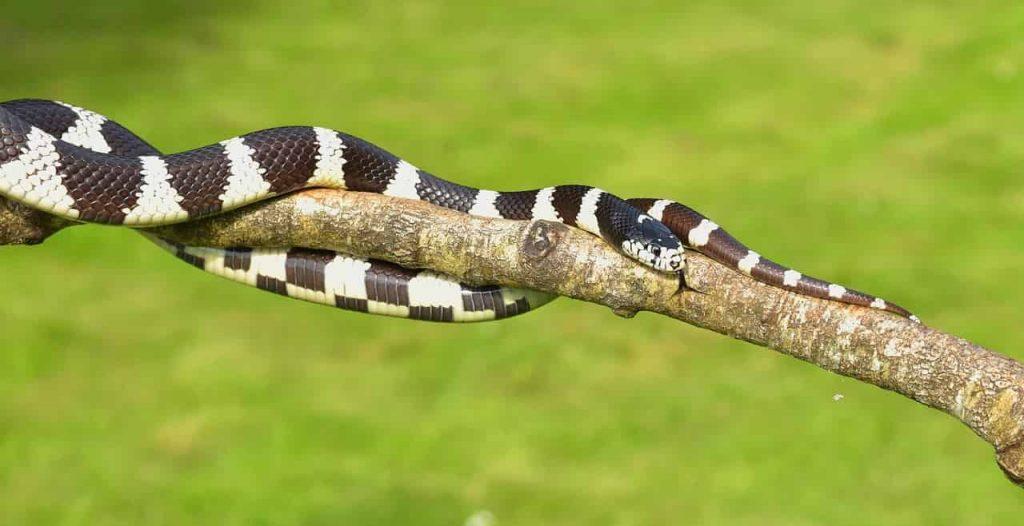 Black and white snake dream interpretation