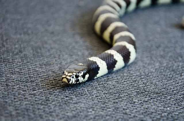meaning of a black and white snake
