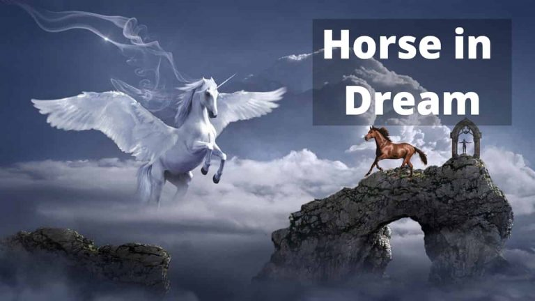 What is the meaning of a horse in dream? The meanings of seeing a horse in a dream