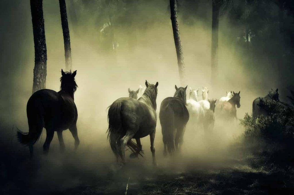 Horse in dream meaning and interpretation