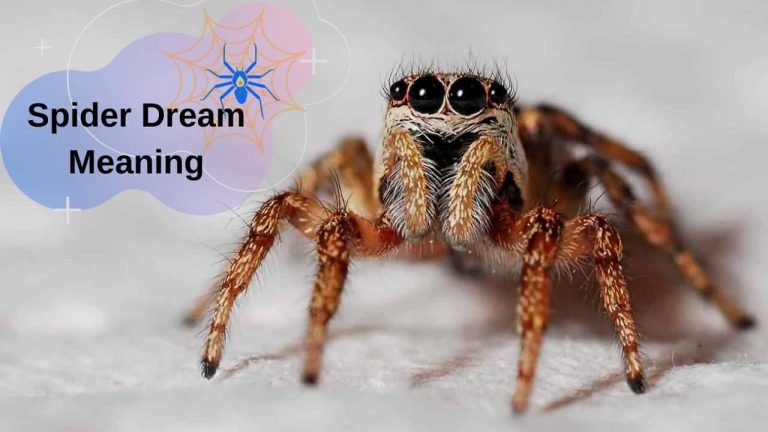 Dream About Spiders Meanings