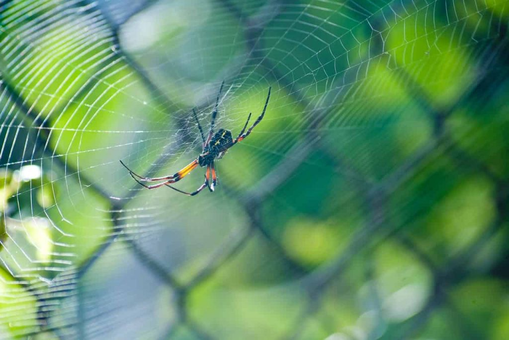 Spiders in dream meaning and interpretation