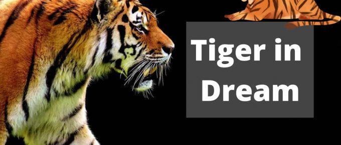 tiger dream meaning