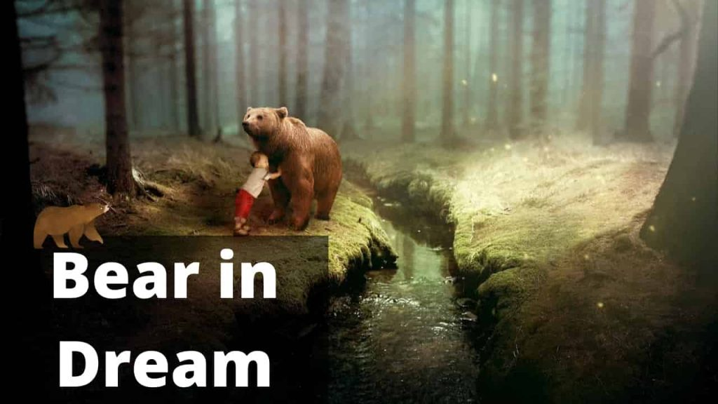 Bear Dream Interpretation Best Dream Meaning Analysis & Answer