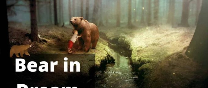 Bear Dream Interpretation Best Dream Meaning Analysis & Answer