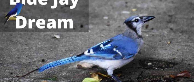 Blue Jay Dream Meaning and Interpretations - Regular Dream