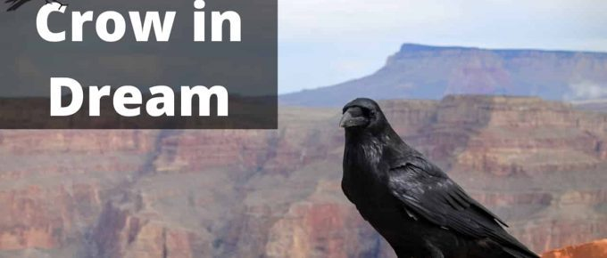 Crow Dreams and What They Mean - What Is My Spirit Animal | Spirit ...