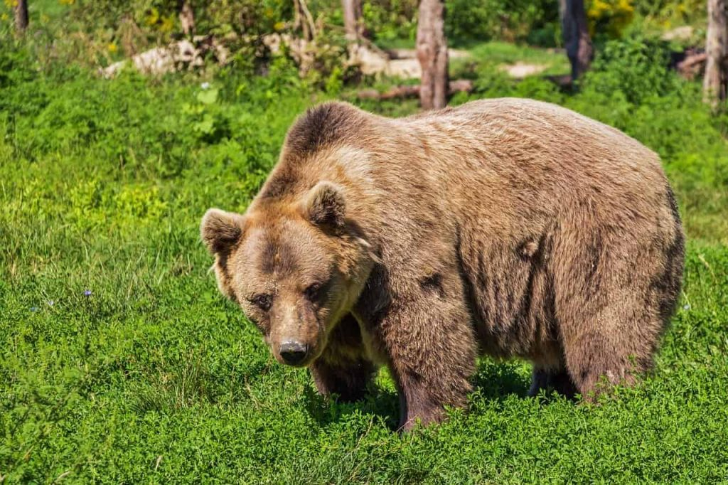 Dream Interpretation Teddy Bear - Regular Dream
