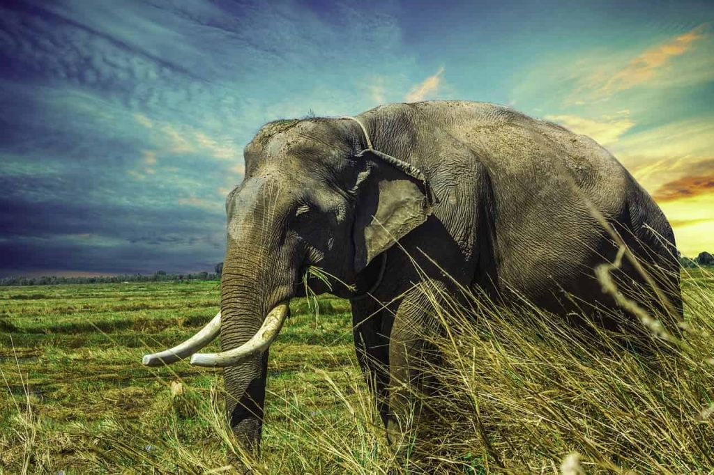 Elephant Dream Interpretations Best Dream Meaning Analysis & Answer