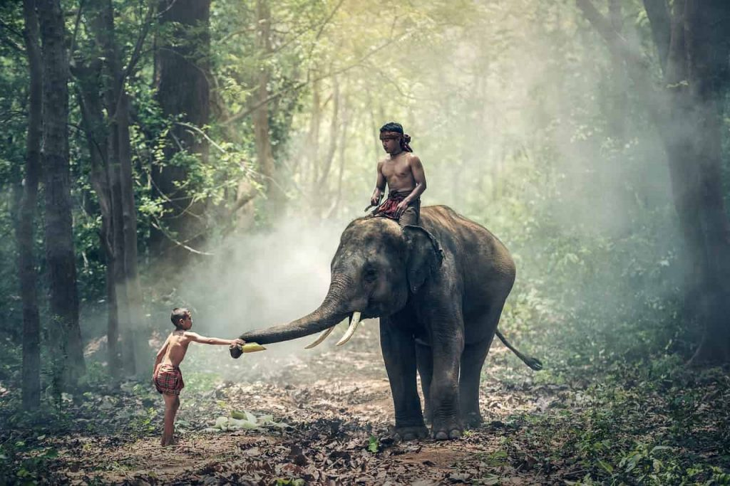 Elephant Dream Meaning - What Is My Spirit Animal | Spirit, Totem ...