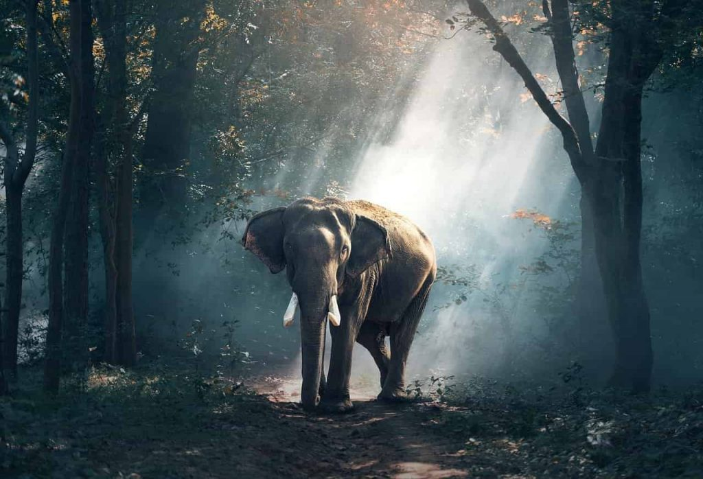 Elephant Symbol and Dream Meaning | Regular Dream