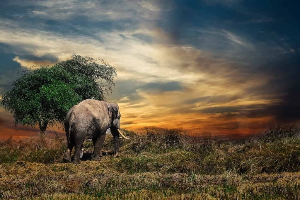 Elephant in dream meaning and interpretation
