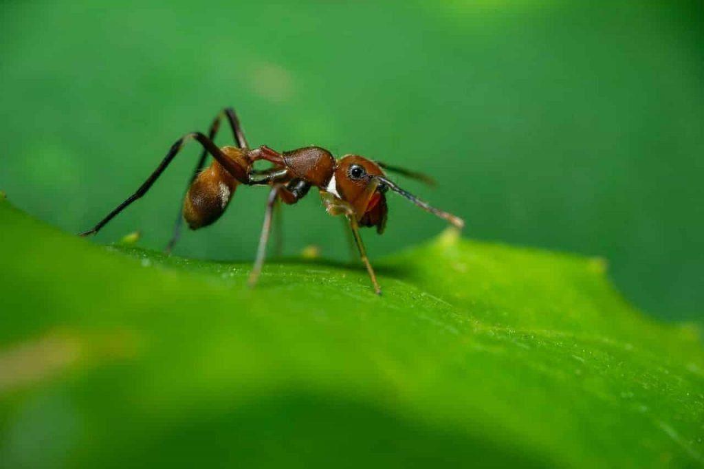 Ants Spirit Animal & Dream Meaning | Regular dream