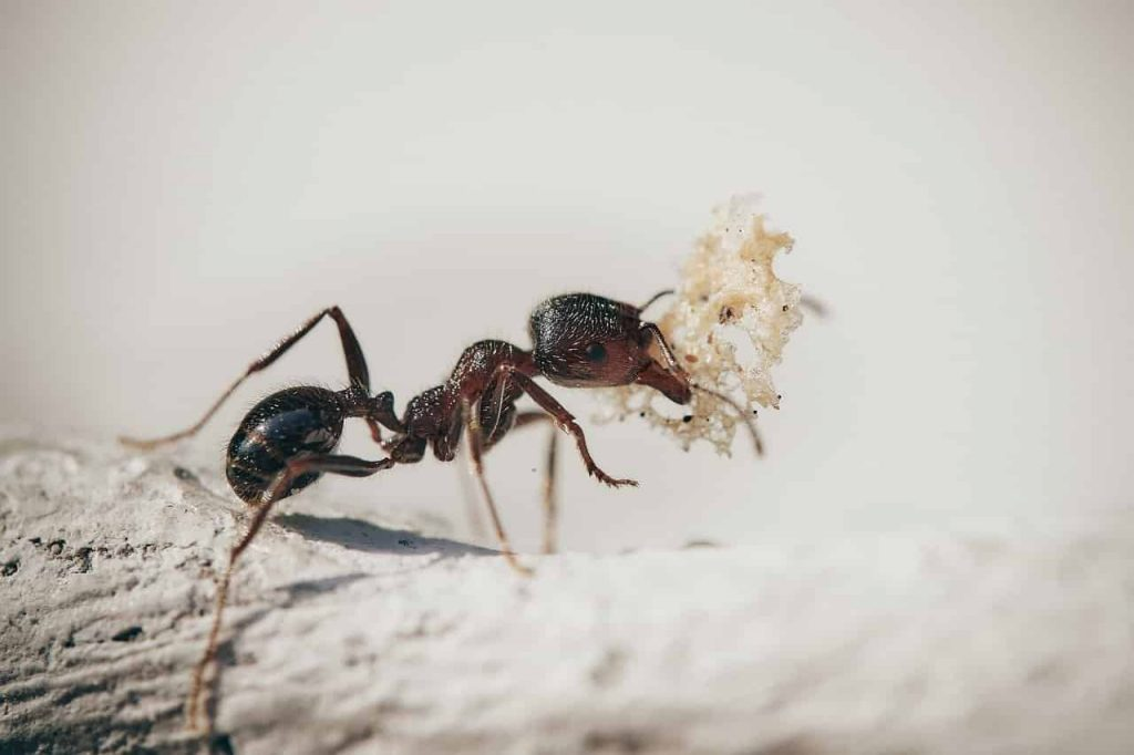 Dream About Ants - Symbolic Meaning And Interpretations - Sign Meaning