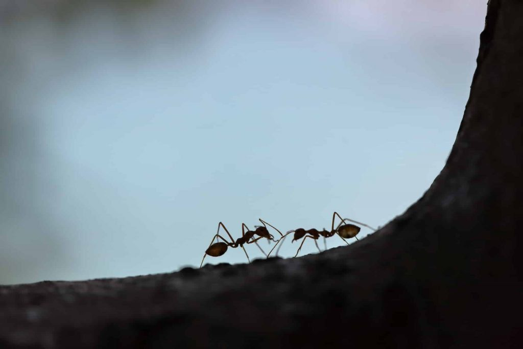 Dreams About Ants – Meaning and Interpretation