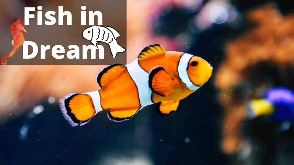 Dreams About Fish – Interpretation and Meaning