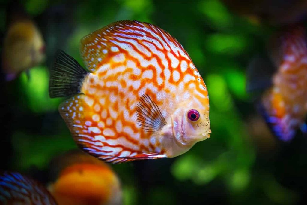 Dreams About Fish – Meaning and Interpretation