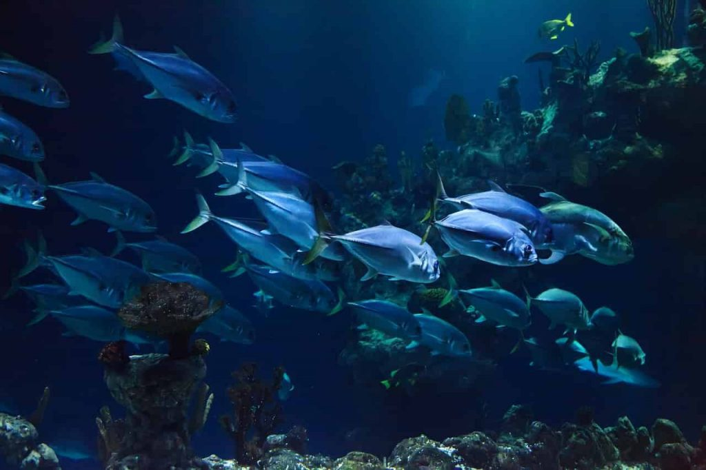 Dreams Meaning and Interpretation - Many Fishes