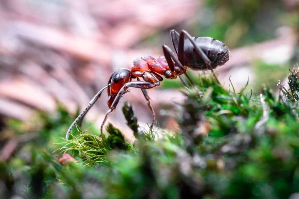 What does ants dreams mean? - Dream Meaning