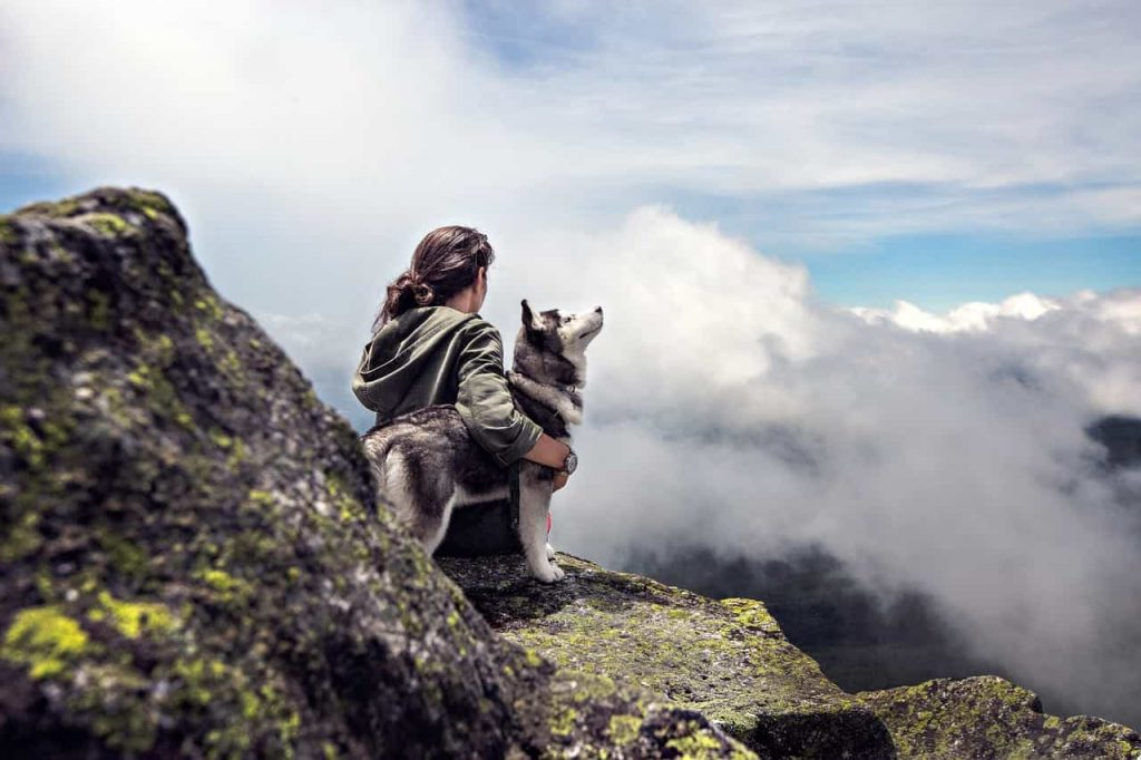 6 Dreams About Dead Dogs – What Does Dreams About Dead Dogs Mean