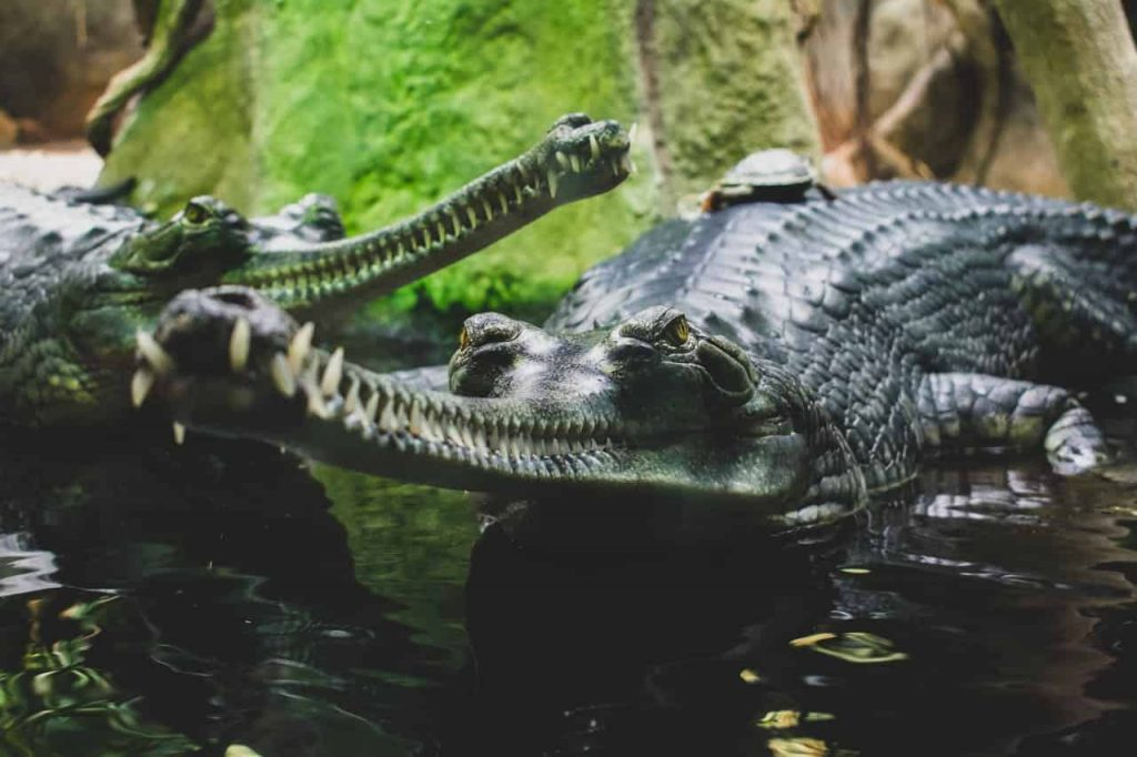 Alligator & Crocodile Symbolism & Meaning | Spirit, Totem & Power Animal