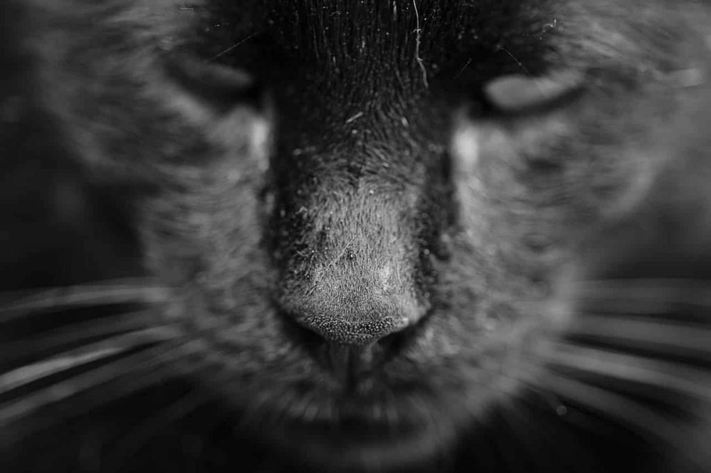 Black Panther Dreams Interpretations - What Is My Spirit Animal | Spirit, Totem, & Power Animals