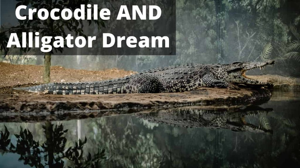 Dreams about Crocodile and Alligator – Interpretation and Meaning