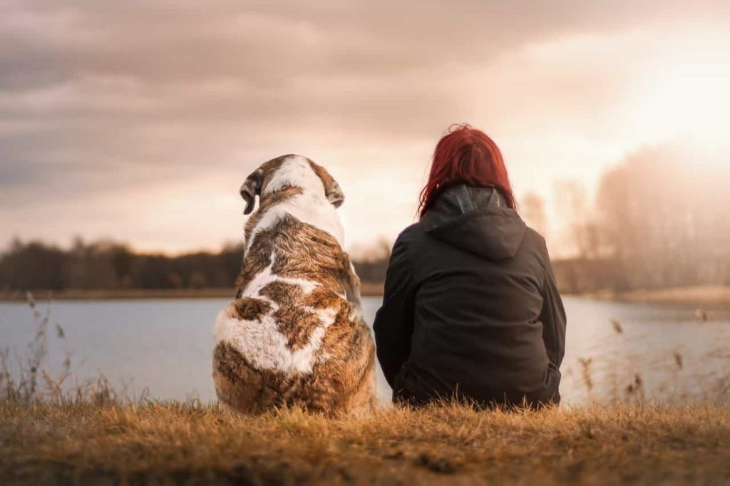 How Dreams of Deceased Pets Affect the Dreamers | Regualar Dream