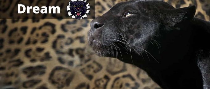 Panther Dream Interpretation and Meaning