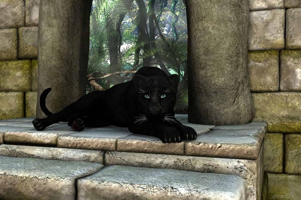 Panther Dream Interpretation and Meaning - Regular Dream