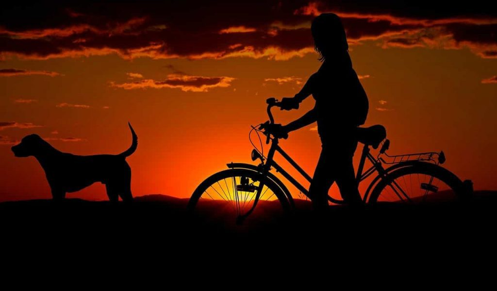 Recurring dreams about your dead pet symbolic - Regular Dream