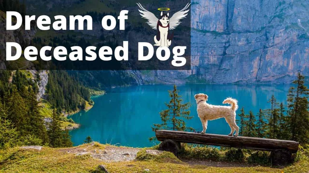 What Dream About Deceased Dog Means