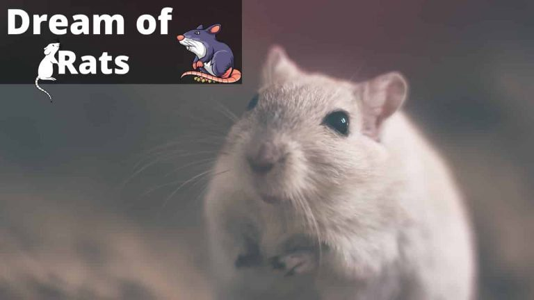 What Dreams About Rats Mean (Biting, Crawling and Running) | Regular Dream
