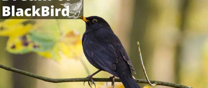 Blackbird Symbolism & Meaning   Blackbird Spirit, Totem & Power Animal
