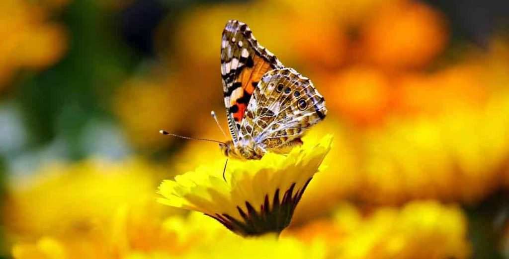 Butterfly Dream Meaning | Animal Dream Symbols