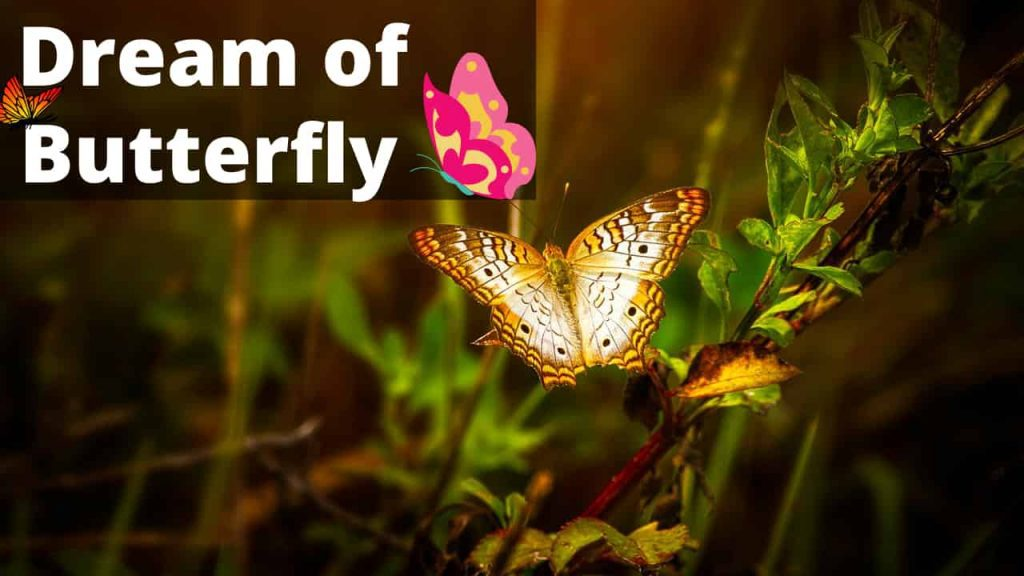 Butterfly Dream Meaning | Get Your Dream Interpretation Now!!!