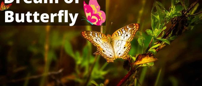 Butterfly Dream Meaning   Get Your Dream Interpretation Now!!!