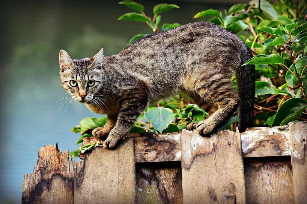 Cat Dream Meaning and Dream Interpretation on Whats-Your-Sign
