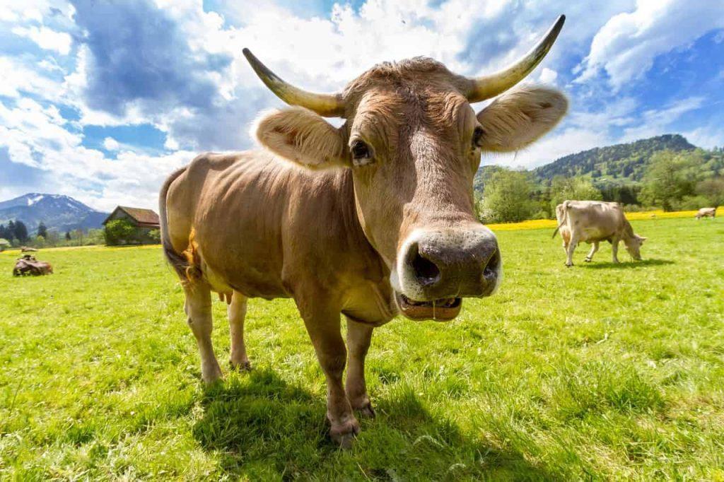 Cow Dream Interpretation - Best Dream Meaning Analysis & Answer
