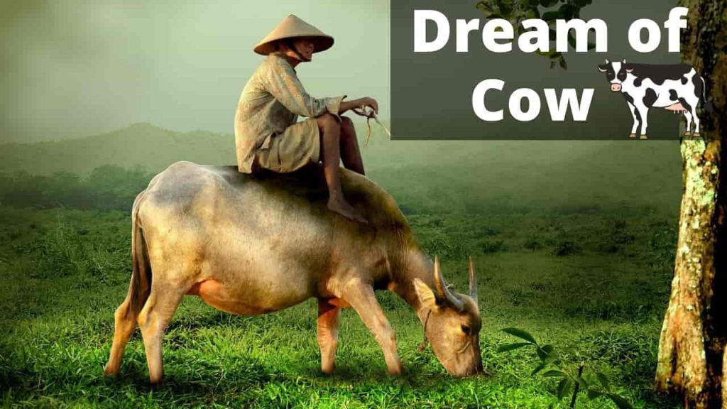 Cows and Cattle - Spirit Animals & Dream Meaning | Regular Dream