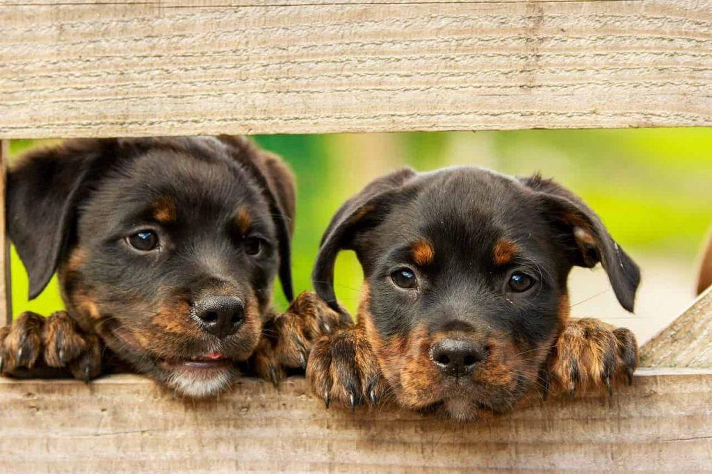 Dog Dream Dictionary- Interpret Now! - Regular Dream