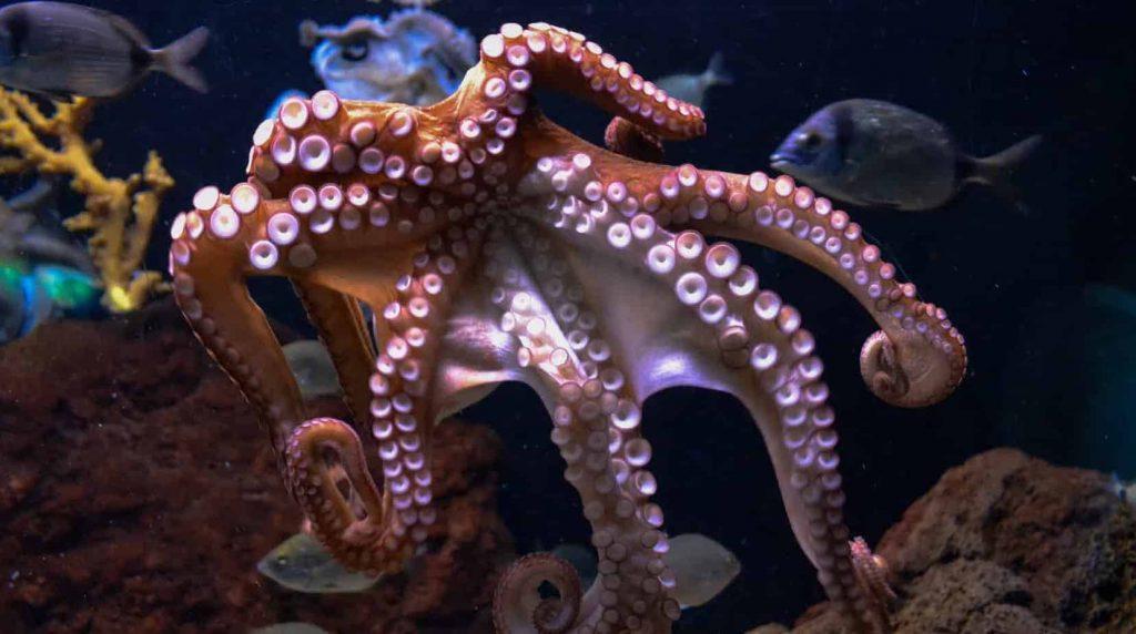 Dream Meaning Octopus Attack   Regular Dream